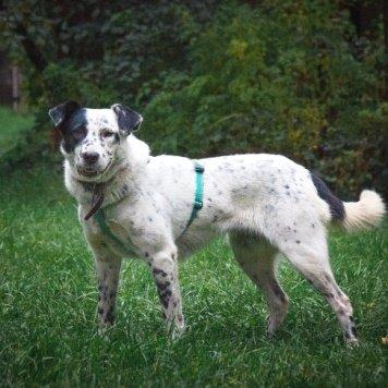 Джесси - Собаки в добрые руки