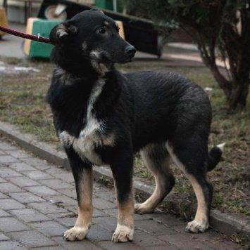 Кась - Собаки в добрые руки