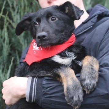 Сливка - Собаки в добрые руки