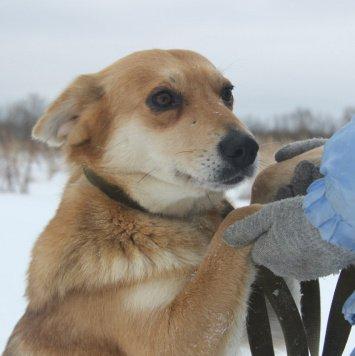 Дыня - Собаки в добрые руки