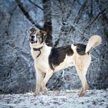 Рэмми - Собаки в добрые руки