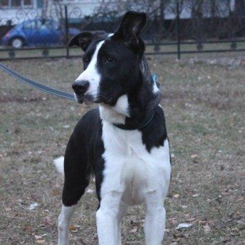Фирудель (Фира) - Собаки в добрые руки