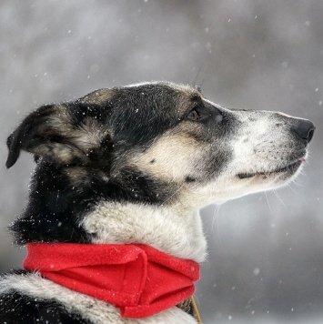 Джекки - Собаки в добрые руки