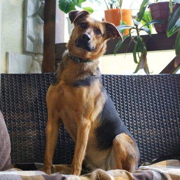 Жози - Собаки в добрые руки