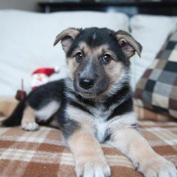 щенки Урсулы - Собаки в добрые руки
