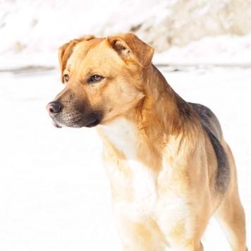 Шуман - Собаки в добрые руки