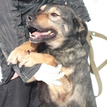 Марсик - Собаки в добрые руки