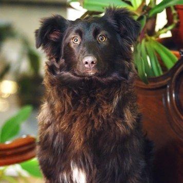 Петси - Собаки в добрые руки