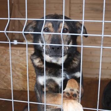 Грейред - Собаки в добрые руки