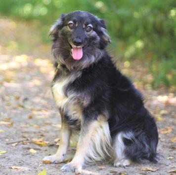 Лоя - Собаки в добрые руки