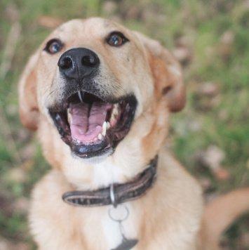 Вейлор - Собаки в добрые руки