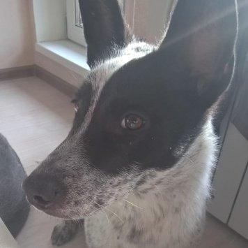 Нора - Найденные собаки