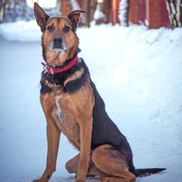 Арчи - Найденные собаки