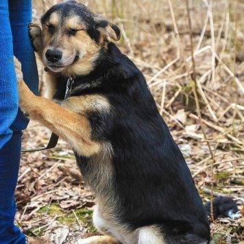 Корсика - Собаки в добрые руки