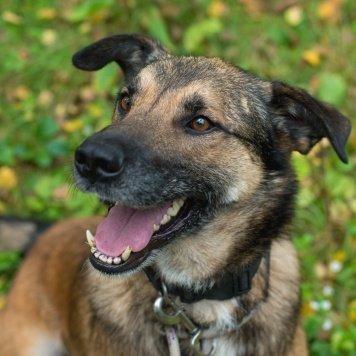 Амулет - Собаки в добрые руки