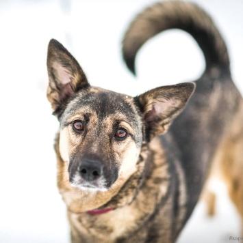 Аиша - Собаки в добрые руки