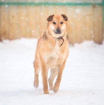 Барбариска - Собаки в добрые руки