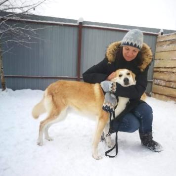 Персик - Собаки в добрые руки