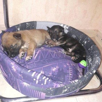 Два малыша - Найденные собаки