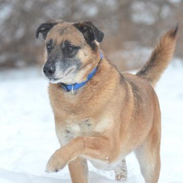 Попрыгун - Собаки в добрые руки