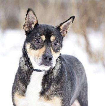 Арден - Собаки в добрые руки