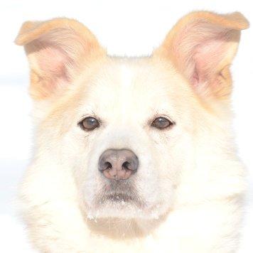 Тимка - Собаки в добрые руки