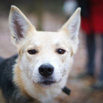 Афродита - Собаки в добрые руки