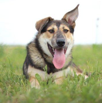 Сириус - Собаки в добрые руки