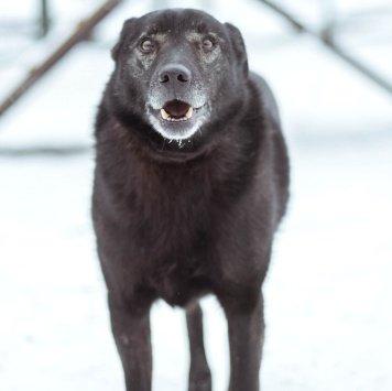 Шася - Собаки в добрые руки