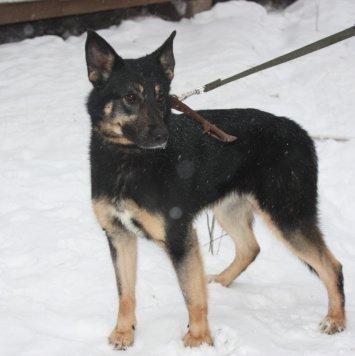 Вега - Собаки в добрые руки