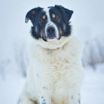 Бьонс - Собаки в добрые руки