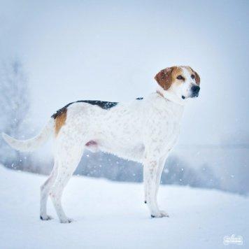 Кларк - Собаки в добрые руки