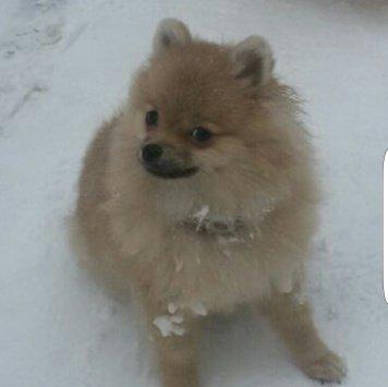 Фиби - Пропавшие собаки