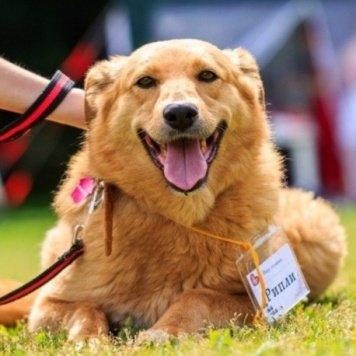 Рипли - Собаки в добрые руки