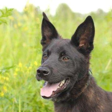Гоша - Собаки в добрые руки