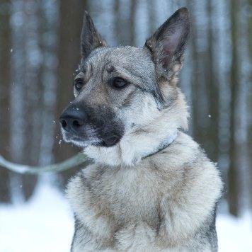 Матильда - Собаки в добрые руки