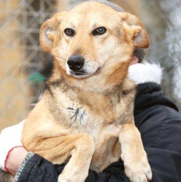 Дана - Собаки в добрые руки