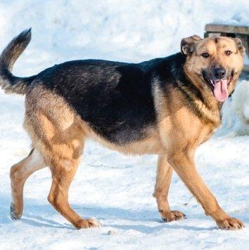 Масяня - Собаки в добрые руки