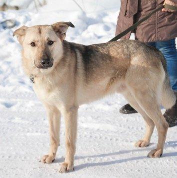 Максимка - Собаки в добрые руки
