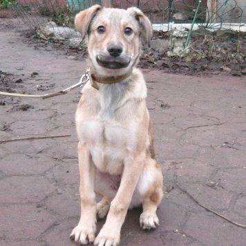 Джек - Собаки в добрые руки