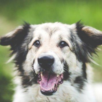 Егор - Собаки в добрые руки