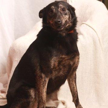 Зарина - Собаки в добрые руки