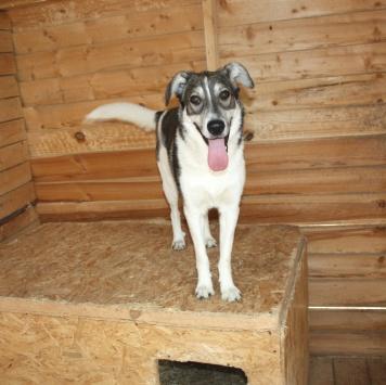 Рики (Балт) - Собаки в добрые руки