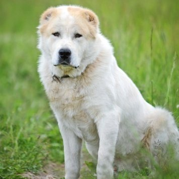 Кинг - Собаки в добрые руки