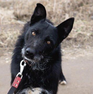Зиточка - Собаки в добрые руки