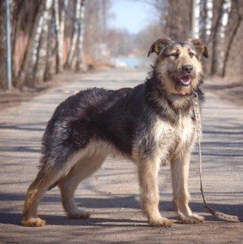 Фанта - Собаки в добрые руки