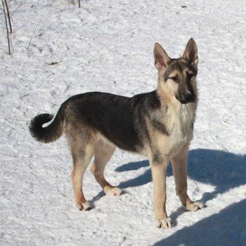 Юта в поиске семьи - Собаки в добрые руки