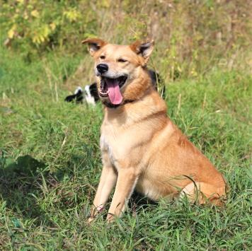 Буч - Собаки в добрые руки