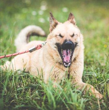 Джемма - Собаки в добрые руки