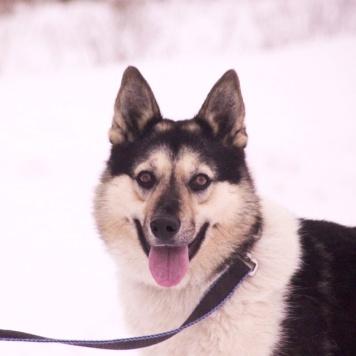 Рианна - Собаки в добрые руки